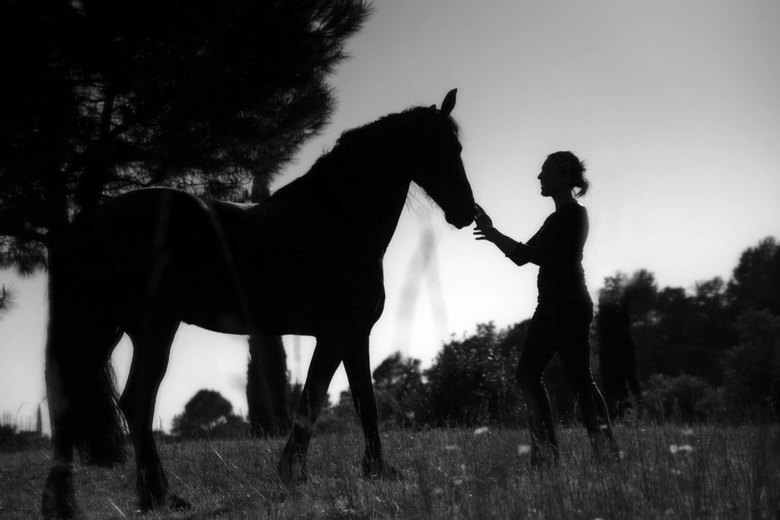 horse-eliane
