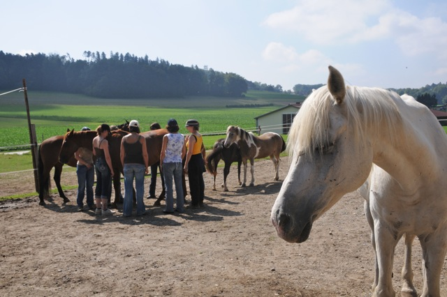 Learning with horses 4