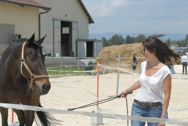 Learning with horses 5
