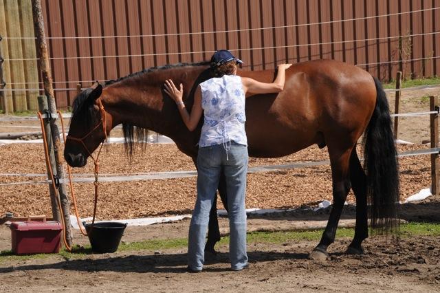 aprender con caballos 9