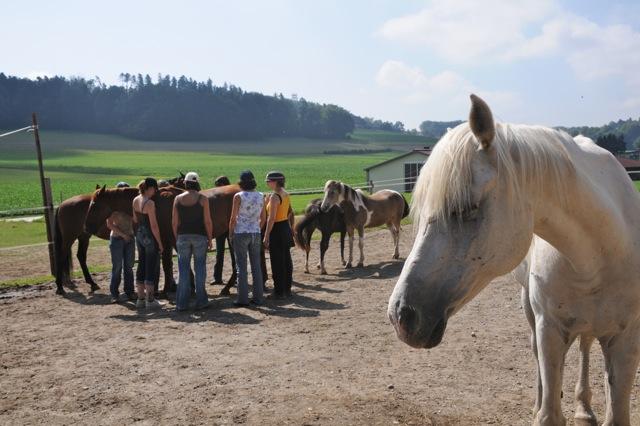 aprender con caballos
