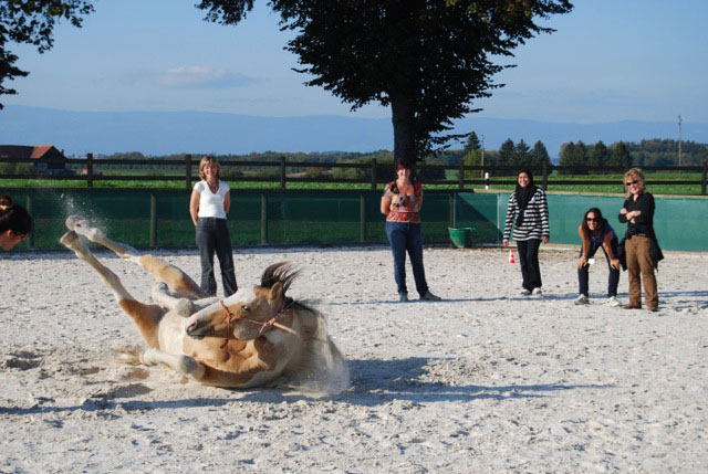 Learning with horses 2