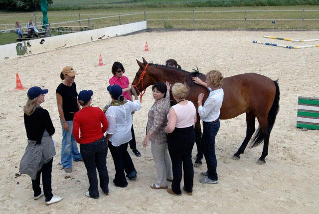 aprender con caballos 3