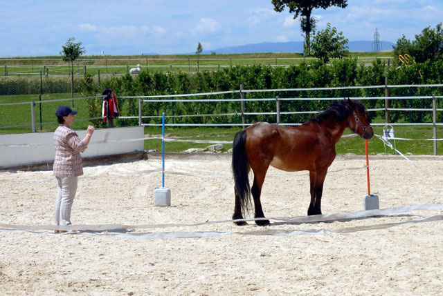 Learning with horses 6