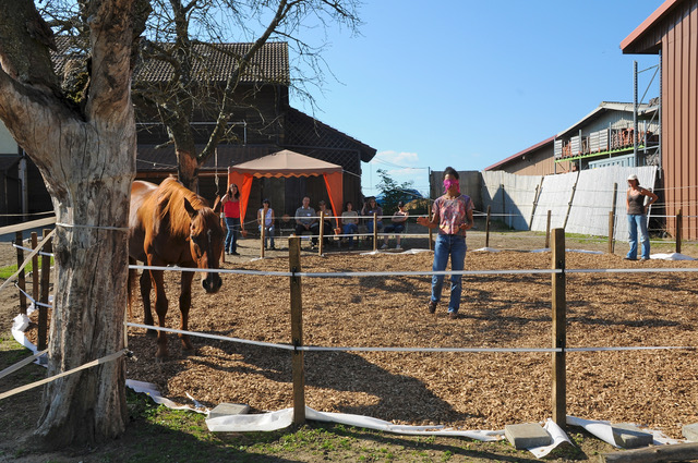 Coaching con caballos en Barcelona