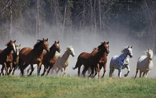 Grow with horses
