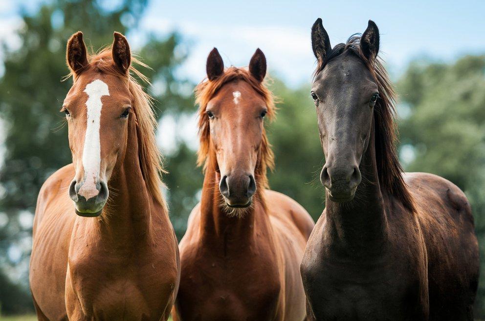 Terapias naturales para caballos