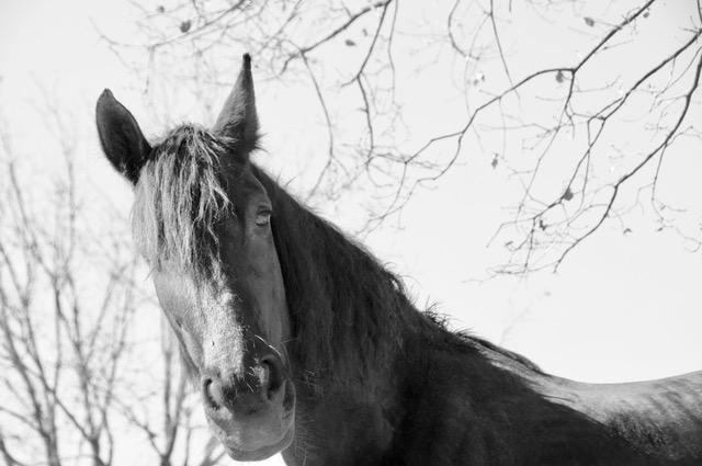 crecimiento personal con caballos