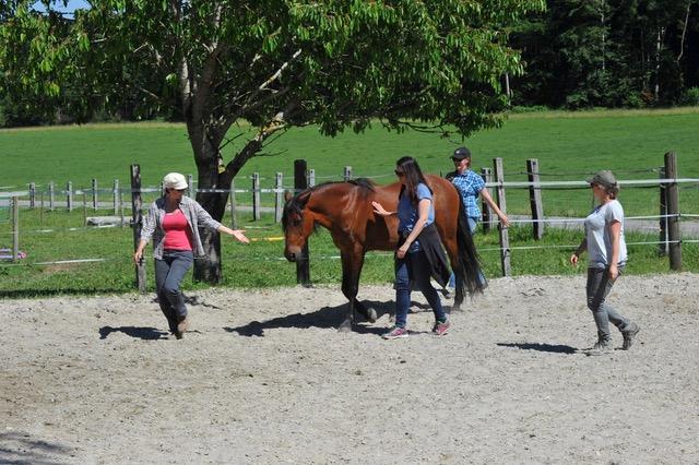 liderazgo coaching con caballos