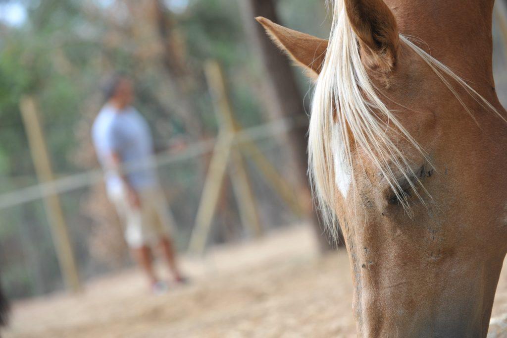 caballos y coaching