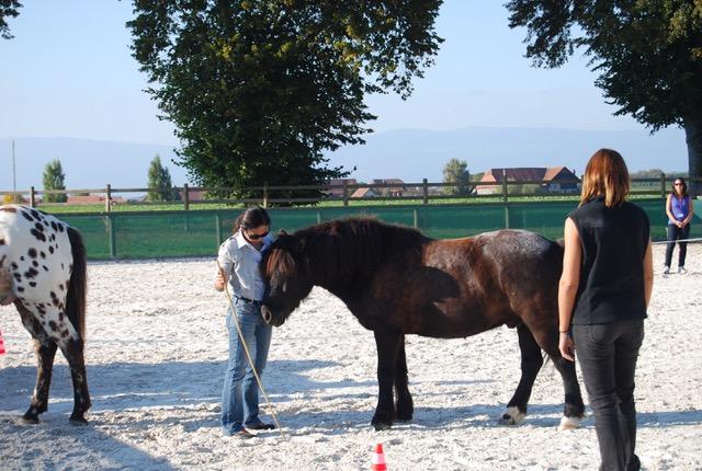 trabajar con caballos