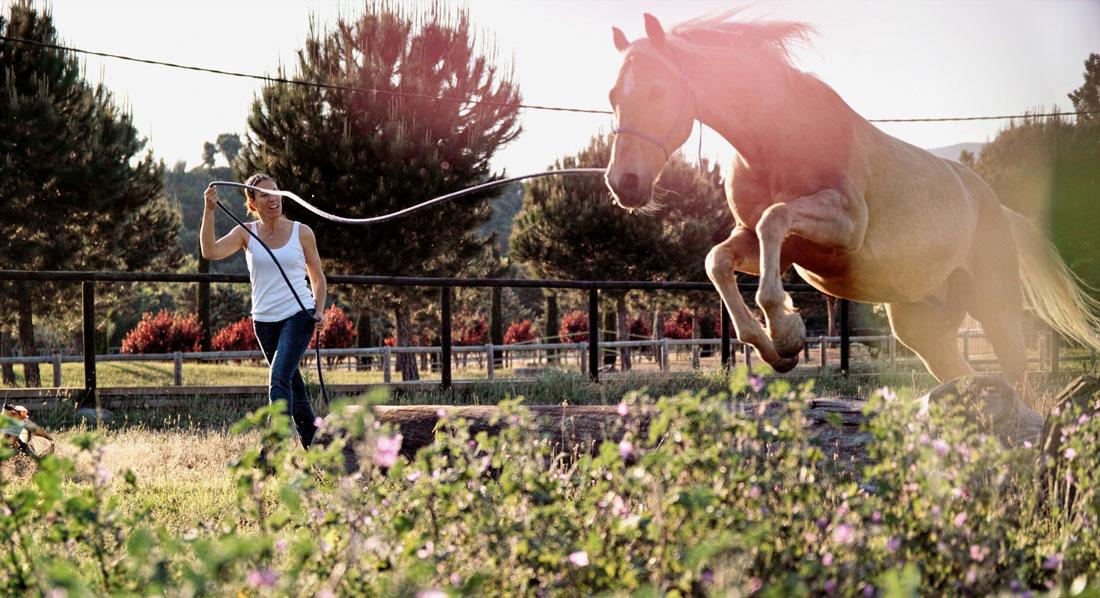 COACHING TRAINING WITH HORSES